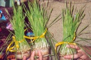 ACTIVITES ENFANTS: semer du blé à la Ste-Barbe