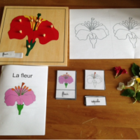 Kids Activity: à la découverte de la fleur (cartes de nomenclature)