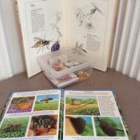 Zoologie: à la découverte de l'abeille