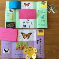 Lapbook: le papillon