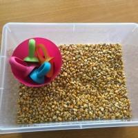 Bac sensoriel: transvasement avec des grains de maïs (Petit Doux 22 mois)