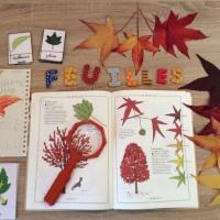 Kids Activity: à la découverte des feuilles