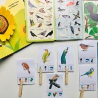 Nature Activity : les oiseaux