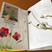 L'herbier des plantes sauvages comestibles (ou utiles)