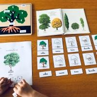 Un peu de botanique : l'arbre