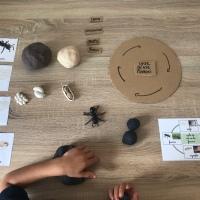 Zoologie : la fourmi