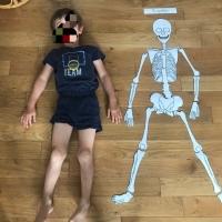 Anatomie : le squelette